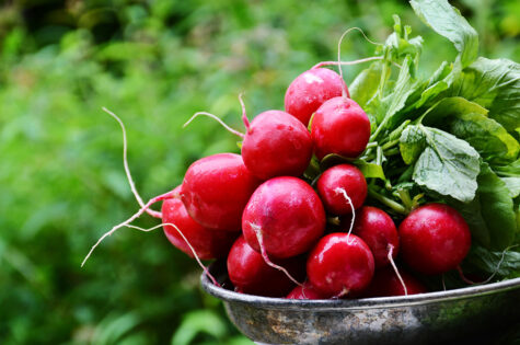 Edible-Wild-Plants-for-Foraging-and-Fun-092820-1-2