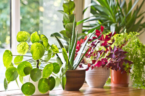 Growing-Tips-for-Year-Round-Edible-Plants