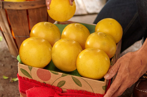 Holiday Gifts for Citrus Lovers