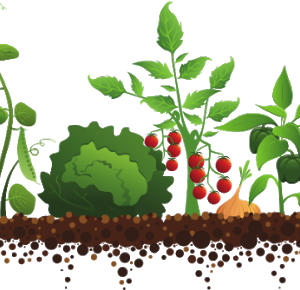 Other Edible Plants