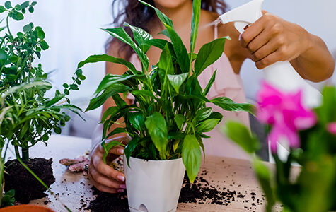 Young,Businesswoman,Sprays,Plants,In,Flowerpots.,Woman,Caring,For,House